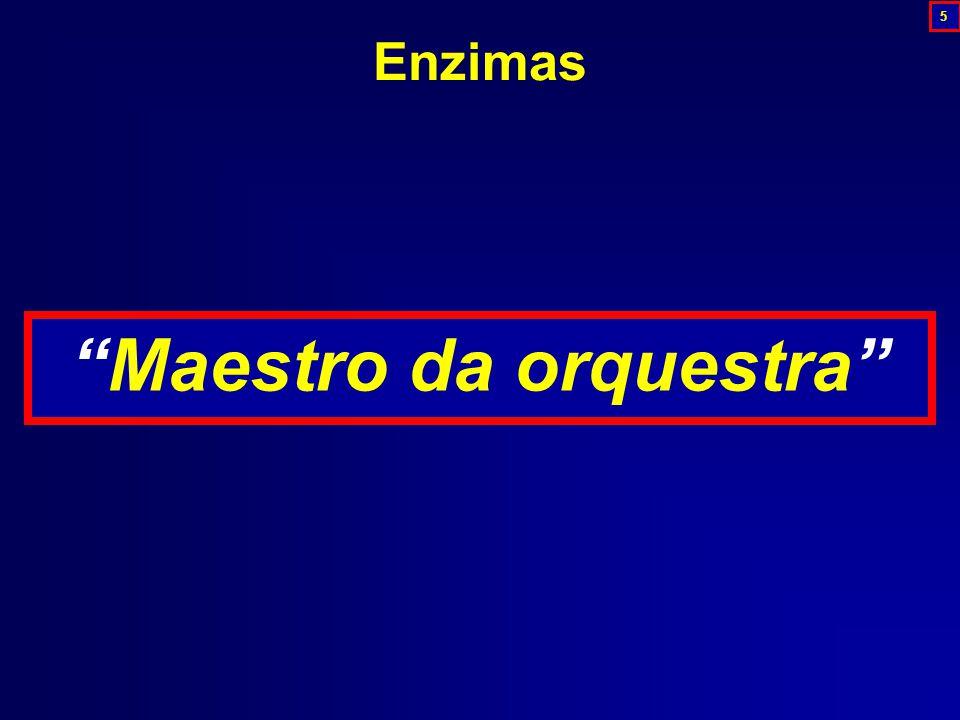 Maestro da orquestra Enzimas 5