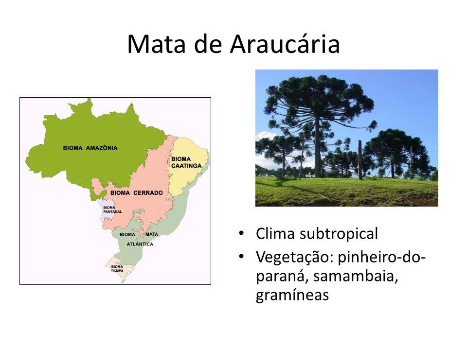 Mata de Araucária Clima subtropical Vegetação: pinheiro-do- paraná, samambaia, gramíneas
