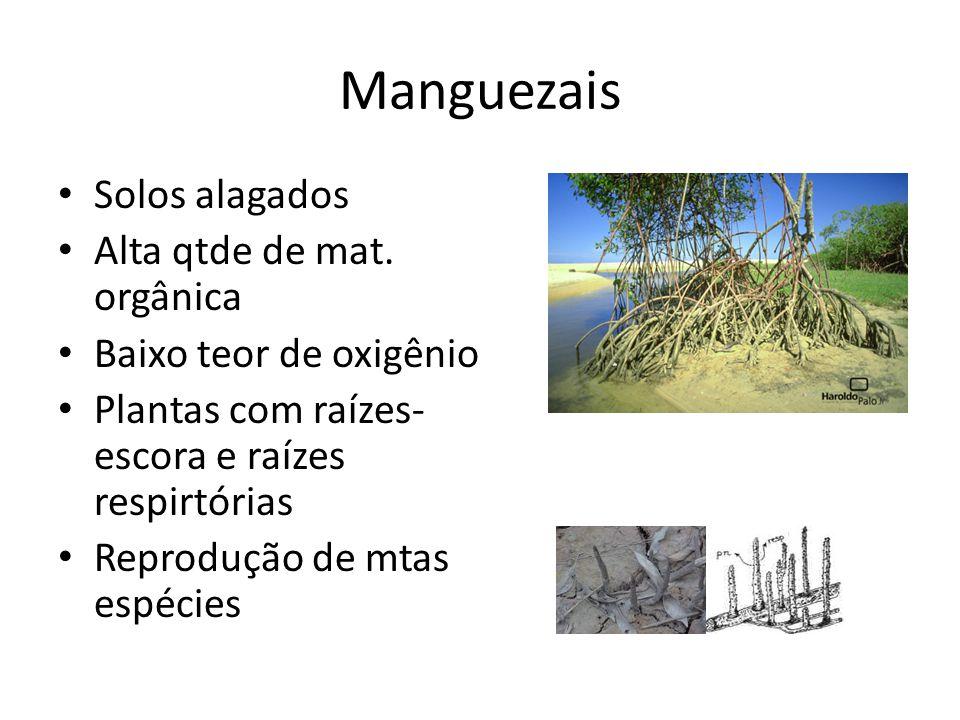 Manguezais Solos alagados Alta qtde de mat. orgânica Baixo teor de oxigênio Plantas com raízes- escora e raízes respirtórias Reprodução de mtas espéci