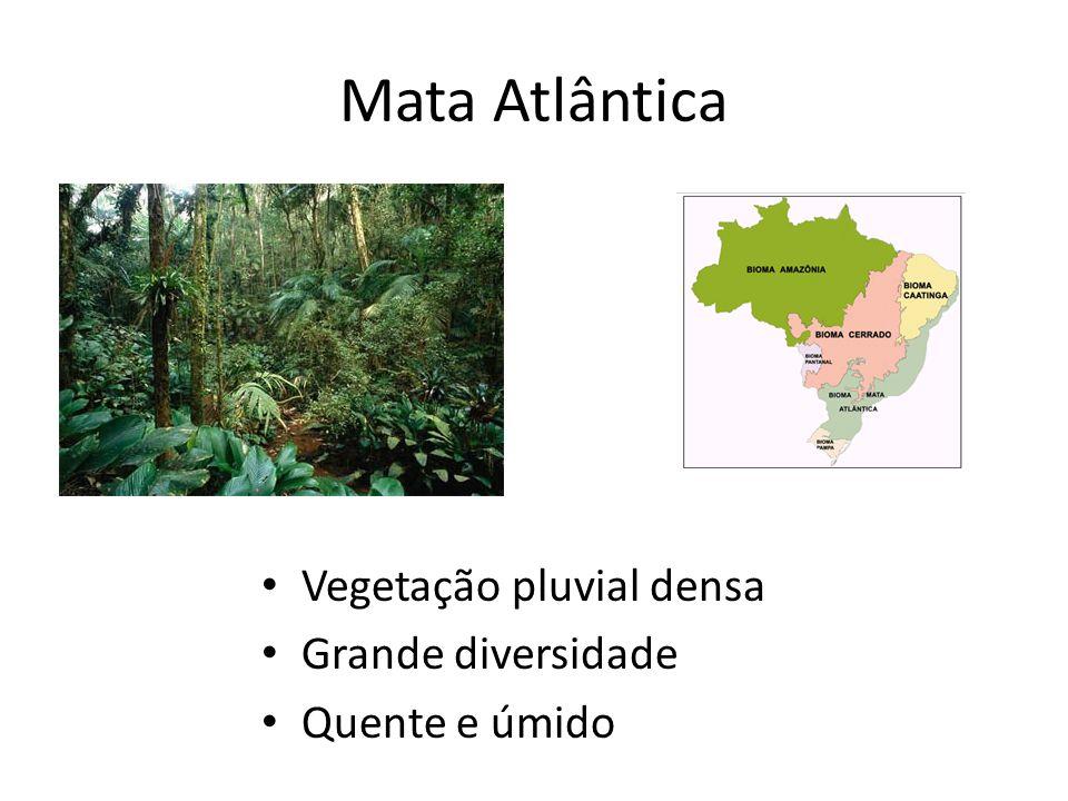 Mata Atlântica Vegetação pluvial densa Grande diversidade Quente e úmido