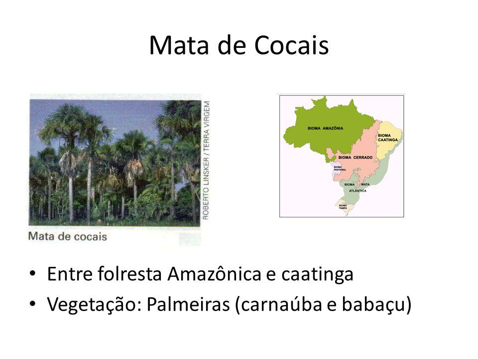 Mata de Cocais Entre folresta Amazônica e caatinga Vegetação: Palmeiras (carnaúba e babaçu)