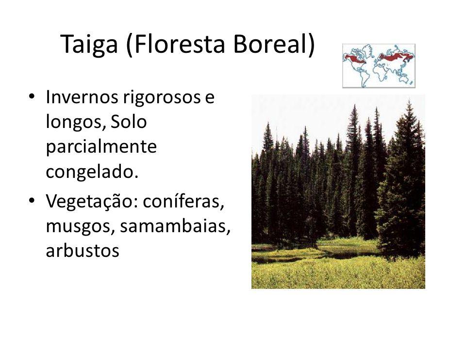 Taiga (Floresta Boreal) Invernos rigorosos e longos, Solo parcialmente congelado. Vegetação: coníferas, musgos, samambaias, arbustos
