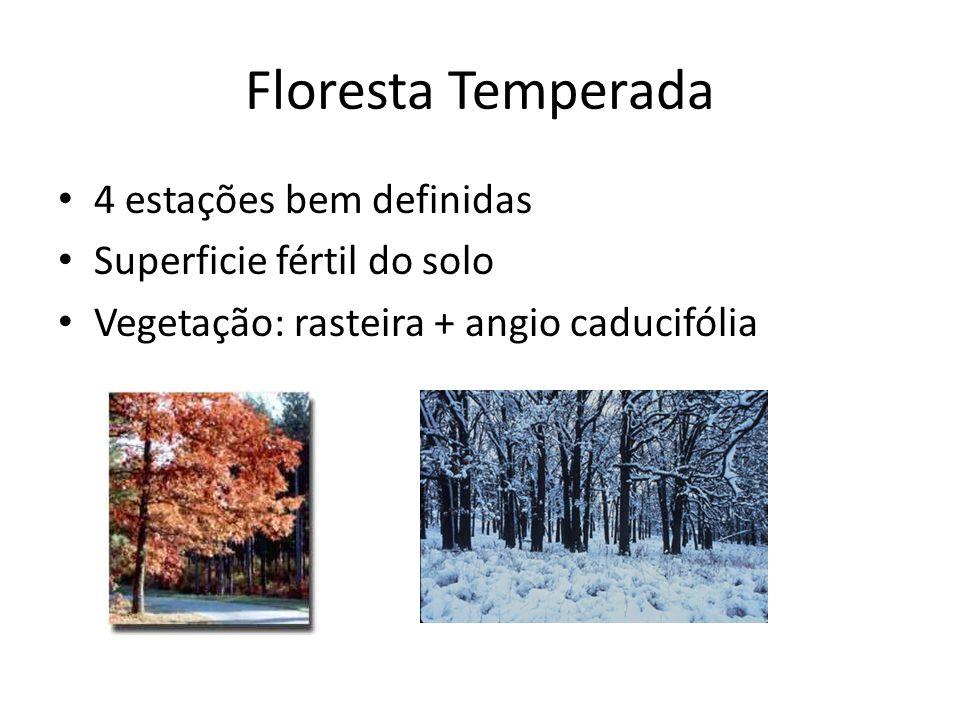 Florestas Pluviais Tropicais Baixas latitudes Alta T e pluviosidade Solo raso (pouco acúmulo da matéria orgânica Vegetação: variada – estratos sup.