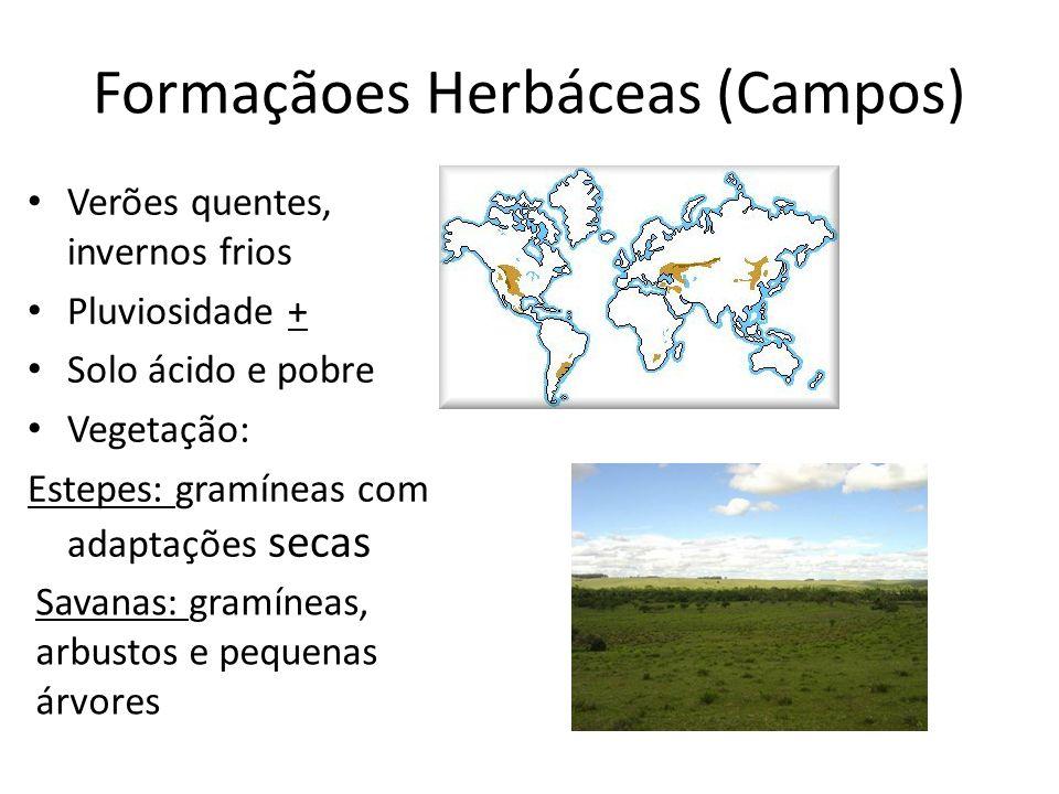 Formaçãoes Herbáceas (Campos) Verões quentes, invernos frios Pluviosidade + Solo ácido e pobre Vegetação: Estepes: gramíneas com adaptações secas Sava