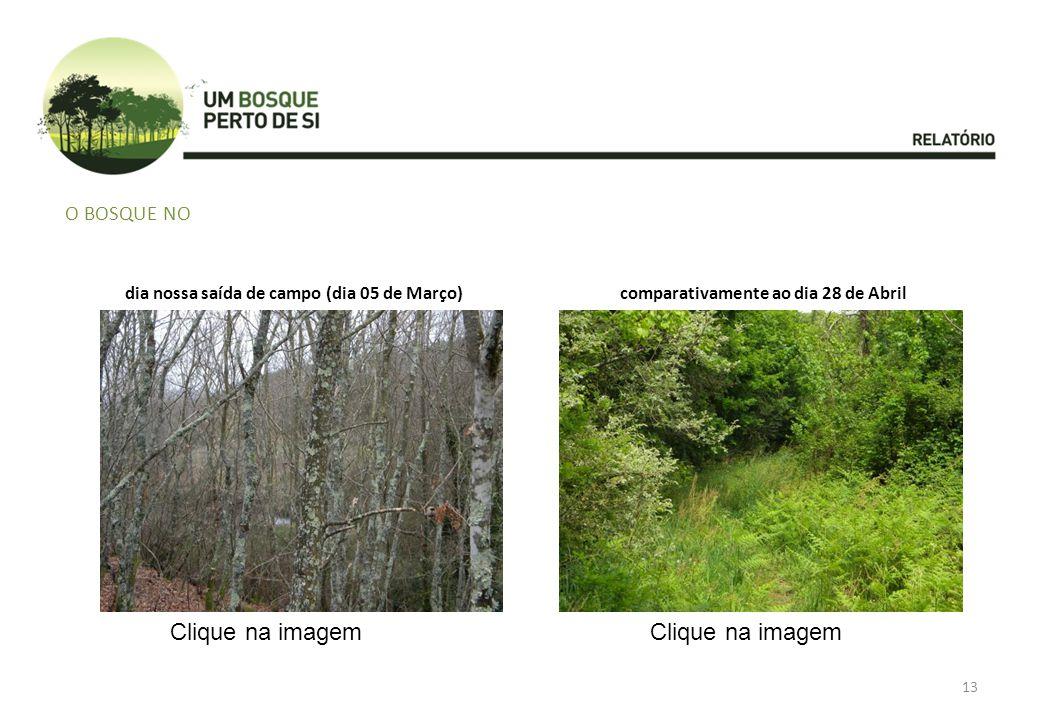 O BOSQUE NO dia nossa saída de campo (dia 05 de Março)comparativamente ao dia 28 de Abril Clique na imagem 13