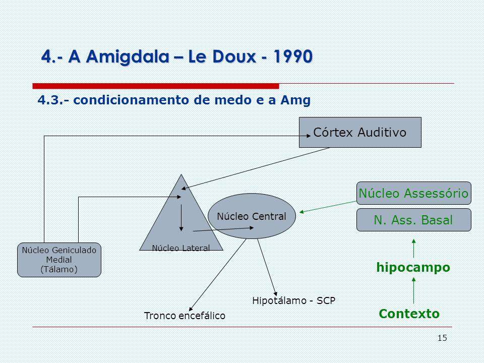 14 4.- A Amigdala Amigdala comportamento SNV hormônios Auditivo visual somático olfatório