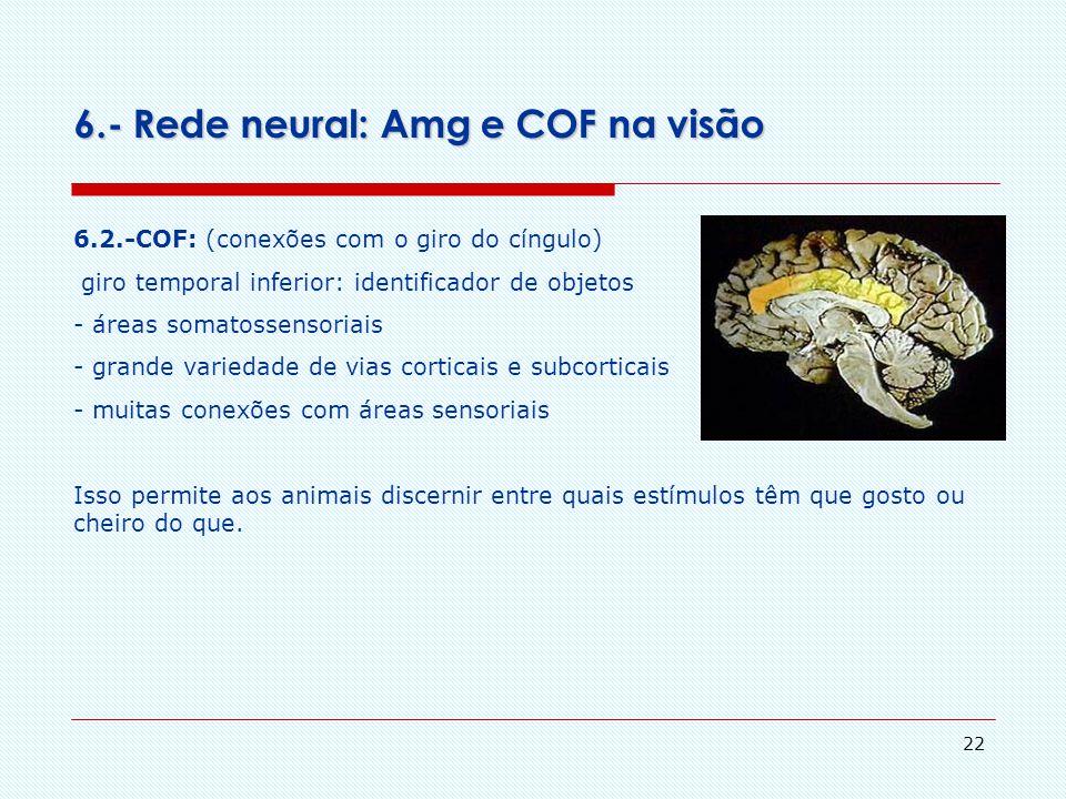 21 6.- Rede neural: Amg e COF na visão 6.1.-Amigdala: conexões (giro do cíngulo, córtex orbitofrontal) Principais vias eferentes: - substância cinzent
