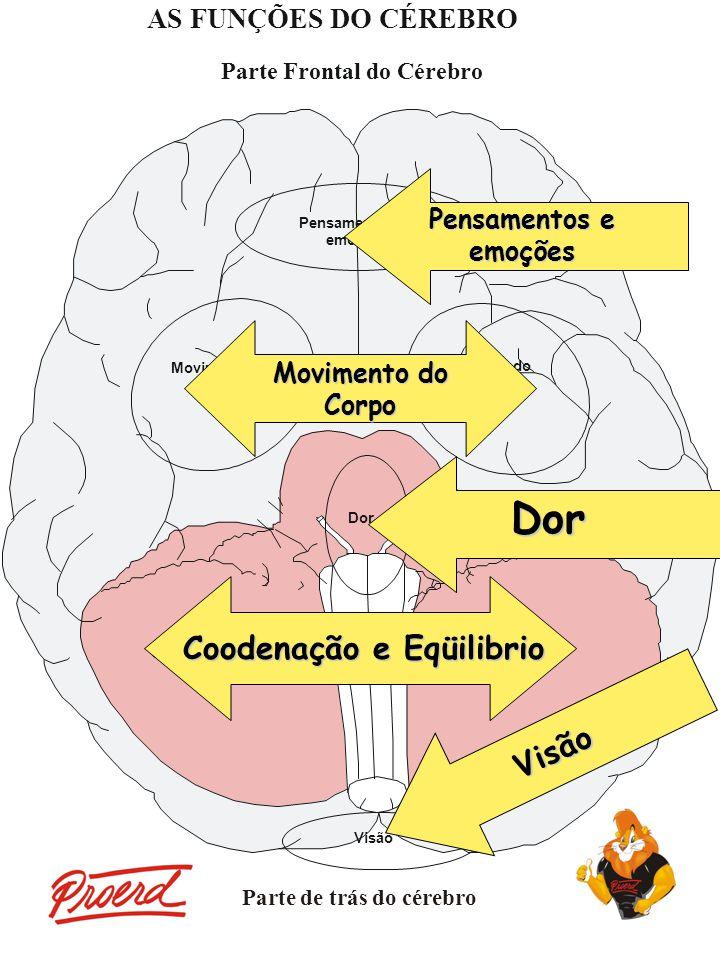 Pensamentos e emoções Dor Visão Movimento do Corpo Coodenação e Eqüilibrio