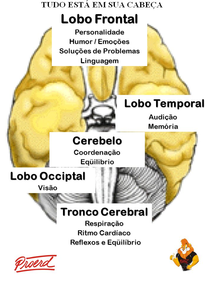 Lobo Frontal Personalidade Humor / Emoções Soluções de Problemas Linguagem Lobo Temporal Audição Memória Cerebelo Coordenação Eqüilibrio Lobo Occiptal