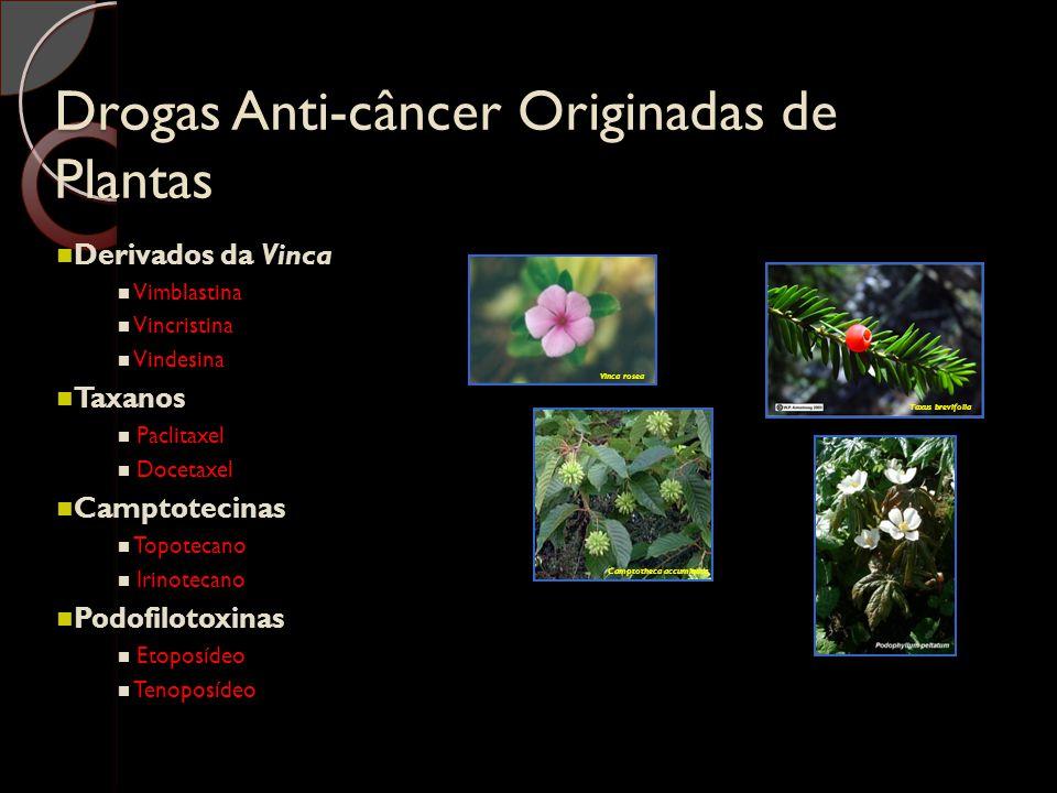 Drogas Anti-câncer Originadas de Plantas Derivados da Vinca Vimblastina Vincristina Vindesina Taxanos Paclitaxel Docetaxel Camptotecinas Topotecano Ir