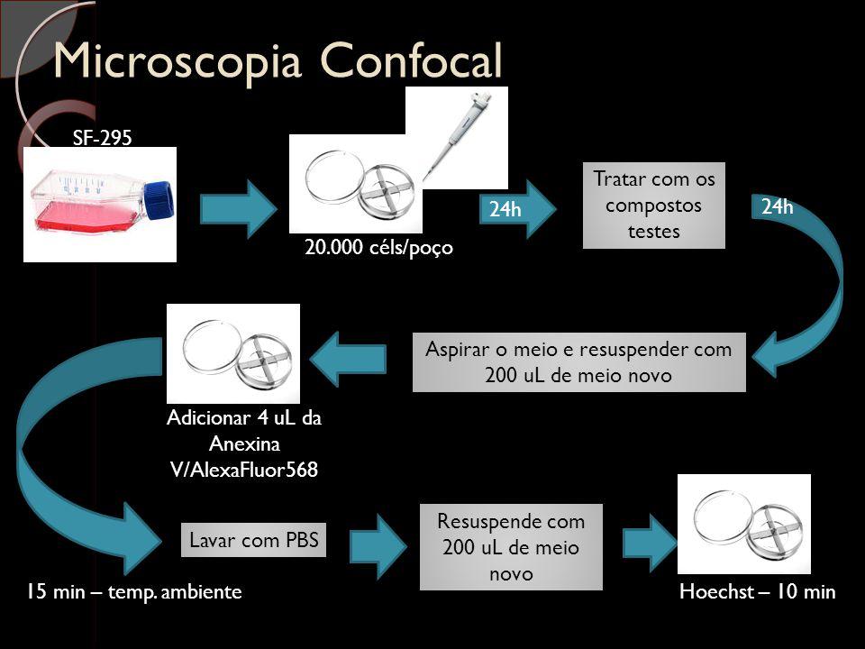Microscopia Confocal SF-295 20.000 céls/poço 24h Aspirar o meio e resuspender com 200 uL de meio novo Tratar com os compostos testes 24h Adicionar 4 u