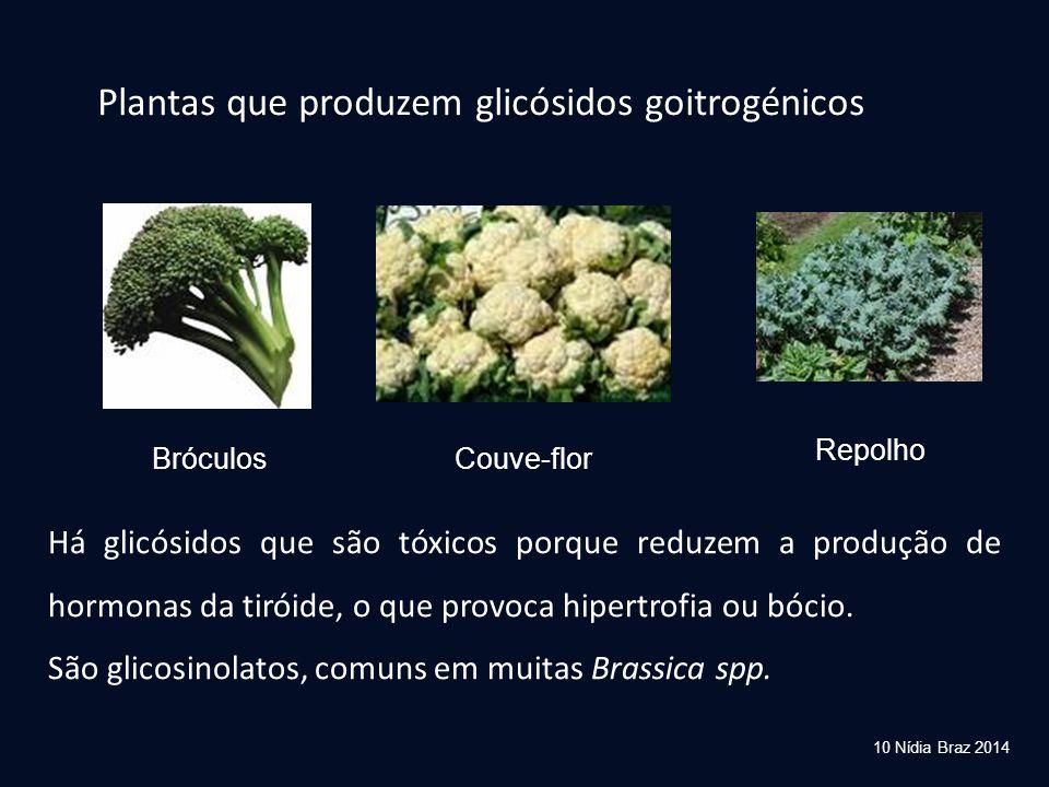 Plantas que produzem glicósidos goitrogénicos BróculosCouve-flor Repolho Há glicósidos que são tóxicos porque reduzem a produção de hormonas da tiróid