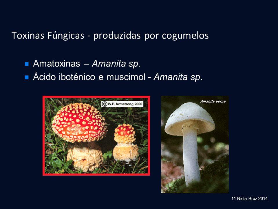Toxinas Fúngicas - produzidas por cogumelos Amatoxinas – Amanita sp. Ácido iboténico e muscimol - Amanita sp. 11 Nídia Braz 2014