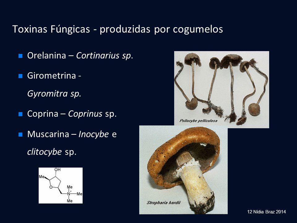 Orelanina – Cortinarius sp. Girometrina - Gyromitra sp. Coprina – Coprinus sp. Muscarina – Inocybe e clitocybe sp. Toxinas Fúngicas - produzidas por c