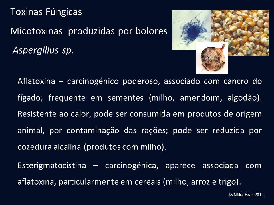 Toxinas Fúngicas Micotoxinas produzidas por bolores Aspergillus sp. Aflatoxina – carcinogénico poderoso, associado com cancro do fígado; frequente em