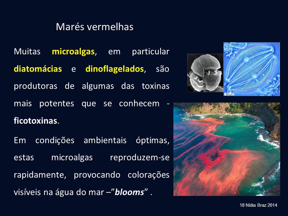 Marés vermelhas Muitas microalgas, em particular diatomácias e dinoflagelados, são produtoras de algumas das toxinas mais potentes que se conhecem - f