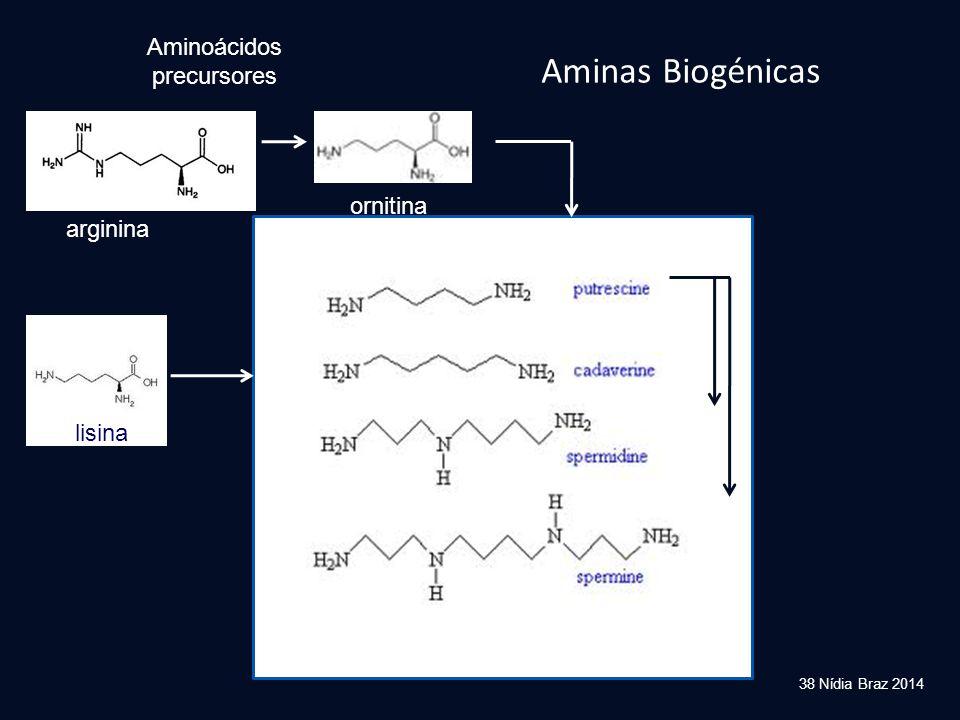 38 Nídia Braz 2014 Aminas Biogénicas lisina Aminoácidos precursores ornitina arginina