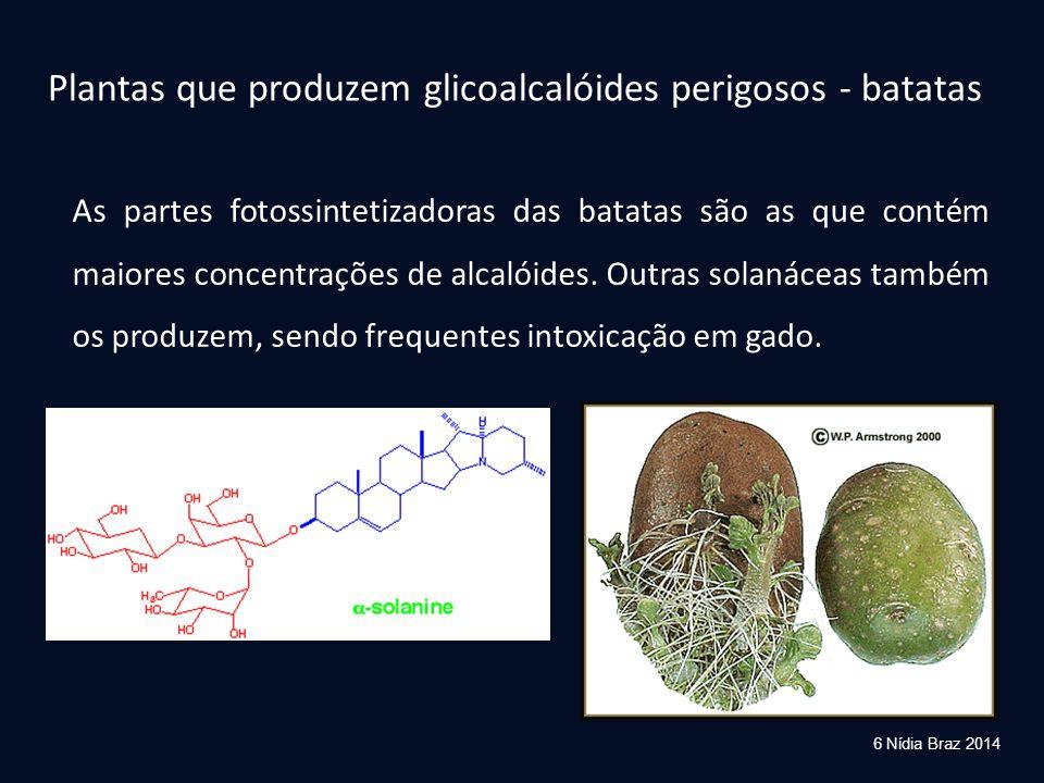 Plantas que produzem glicoalcalóides perigosos - beladona e figueira do inferno Atropa belladonna Datura stramonium Contém toxinas semelhantes à atropina, que bloqueiam neuroreceptores 7 Nídia Braz 2014 figueira do inferno beladona