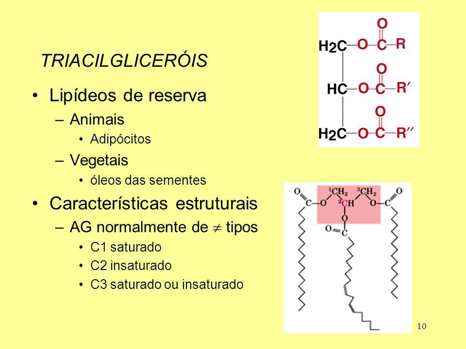 10 TRIACILGLICERÓIS Lipídeos de reserva –Animais Adipócitos –Vegetais óleos das sementes Características estruturais –AG normalmente de  tipos C1 sat