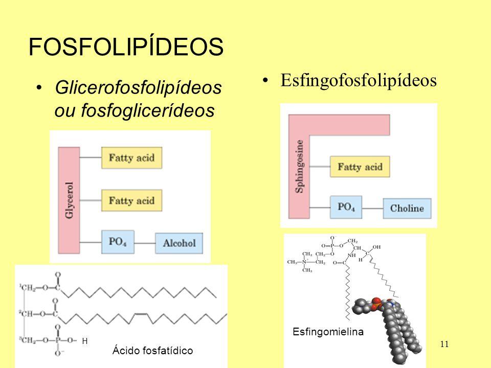 H FOSFOLIPÍDEOS Glicerofosfolipídeos ou fosfoglicerídeos Esfingofosfolipídeos 11 Ácido fosfatídico Esfingomielina