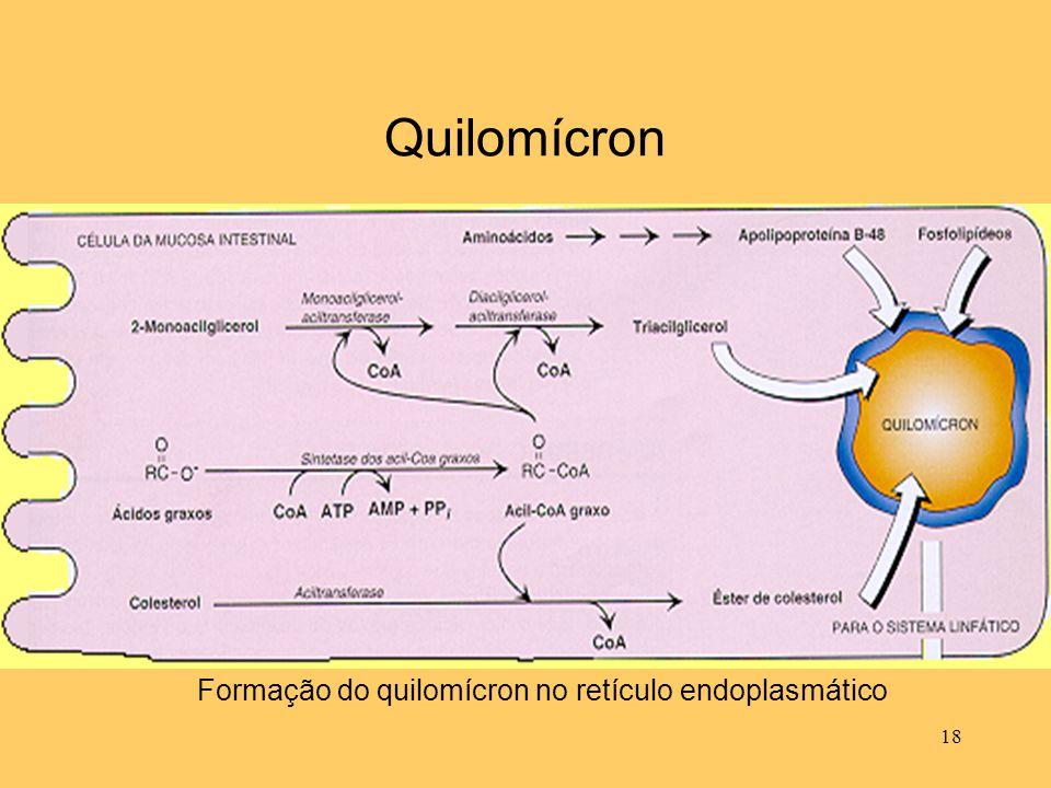 18 Quilomícron Formação do quilomícron no retículo endoplasmático