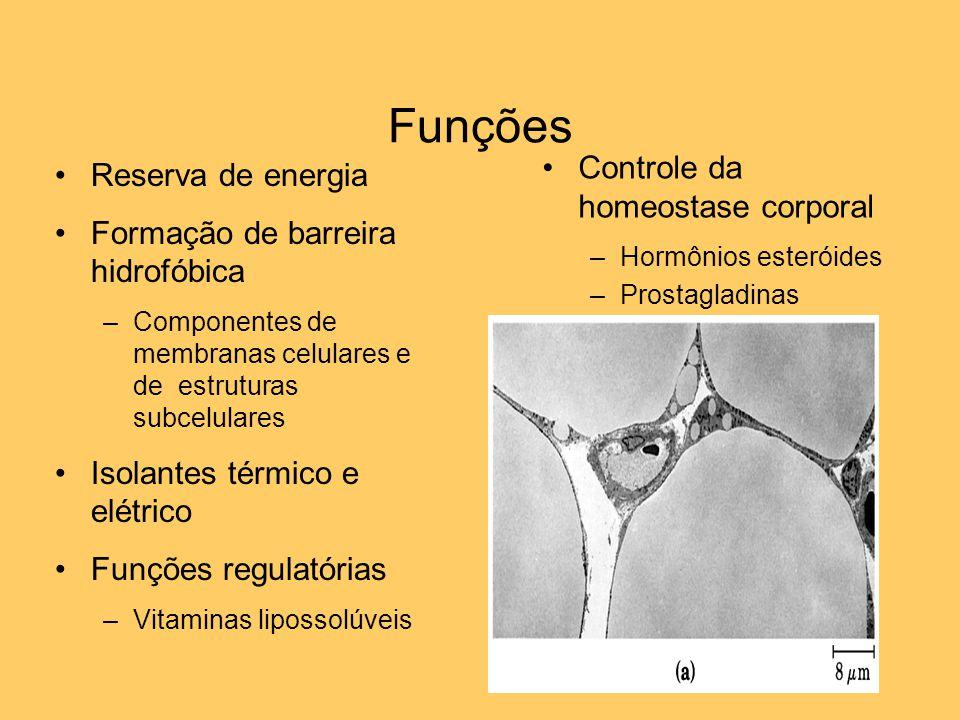 Funções Reserva de energia Formação de barreira hidrofóbica –Componentes de membranas celulares e de estruturas subcelulares Isolantes térmico e elétr