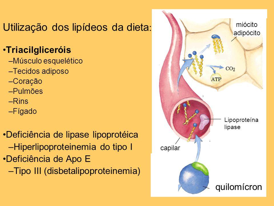 20 Utilização dos lipídeos da dieta : Triacilgliceróis –Músculo esquelético –Tecidos adiposo –Coração –Pulmões –Rins –Fígado Deficiência de lipase lip