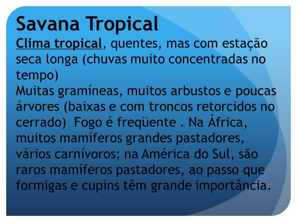 Savana Tropical Clima tropical, quentes, mas com estação seca longa (chuvas muito concentradas no tempo) Muitas gramíneas, muitos arbustos e poucas ár