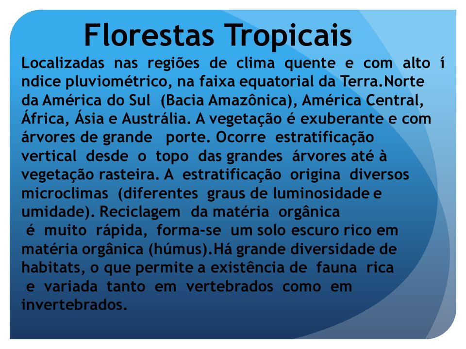 Florestas Tropicais Localizadas nas regiões de clima quente e com alto í ndice pluviométrico, na faixa equatorial da Terra.Norte da América do Sul (Ba