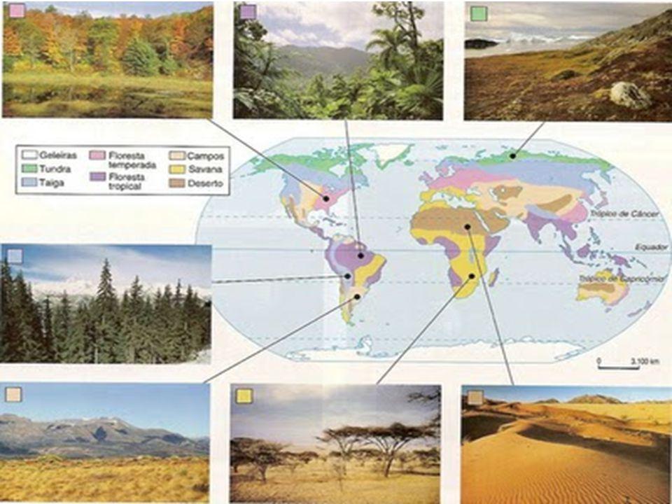 Tundra Situa-se nas regiões próximas ao Pólo Ártico, norte do Canadá, da Europa e da Ásia.