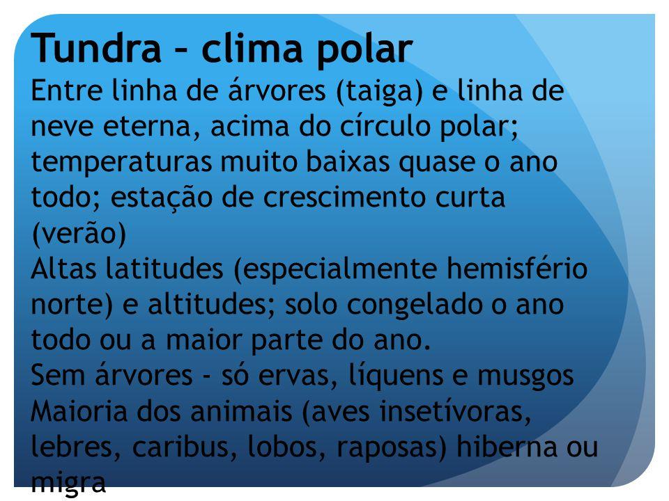 Tundra – clima polar Entre linha de árvores (taiga) e linha de neve eterna, acima do círculo polar; temperaturas muito baixas quase o ano todo; estaçã