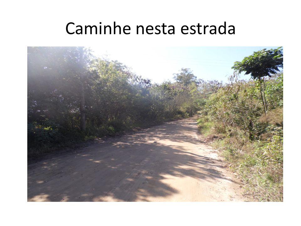 Caminhe nesta estrada