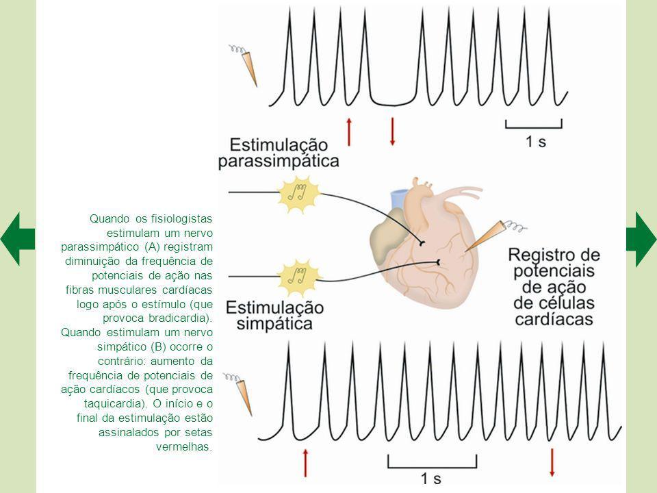 A maioria dos órgãos recebe inervação autonômica dupla: simpática e parassimpática. Nesse caso, há interação entre ambas as divisões para o controle f