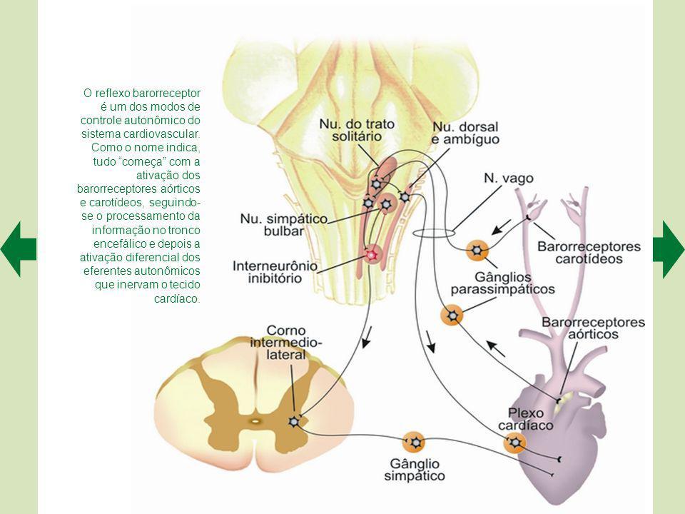 O controle do sistema digestório pelo SNA envolve diferentes etapas (numeradas de acordo com a descrição no texto).