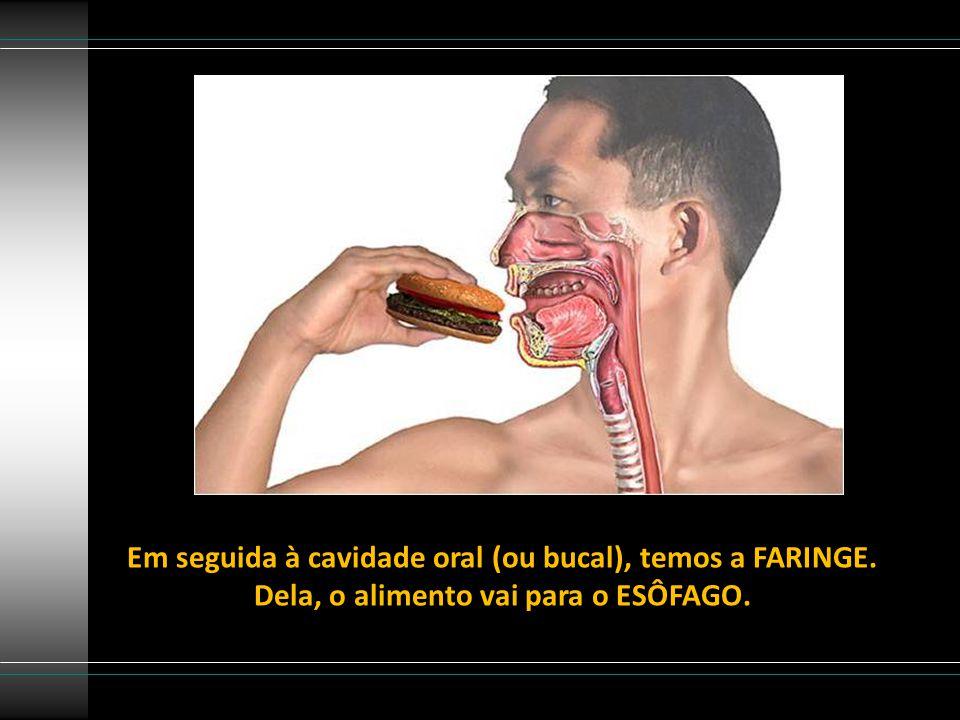 Em seguida à cavidade oral (ou bucal), temos a FARINGE. Dela, o alimento vai para o ESÔFAGO.
