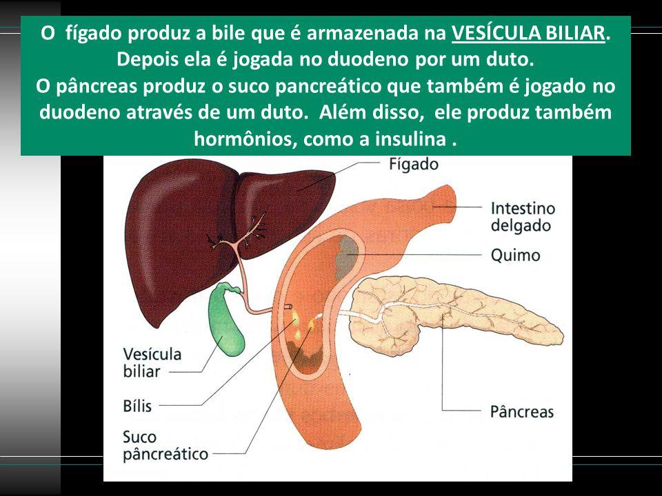 O fígado produz a bile que é armazenada na VESÍCULA BILIAR. Depois ela é jogada no duodeno por um duto. O pâncreas produz o suco pancreático que també