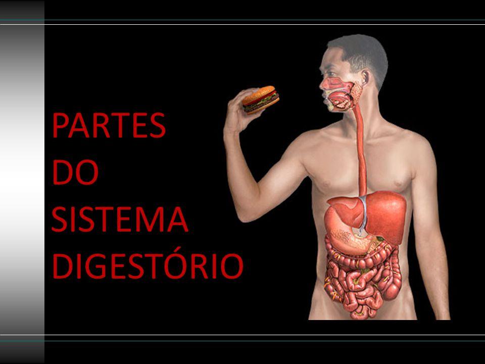 PARTES DO SISTEMA DIGESTÓRIO
