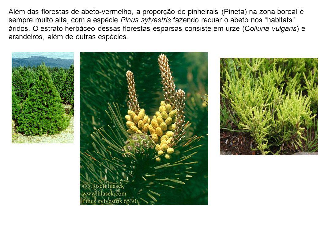 Além das florestas de abeto-vermelho, a proporção de pinheirais (Pineta) na zona boreal é sempre muito alta, com a espécie Pinus sylvestris fazendo re