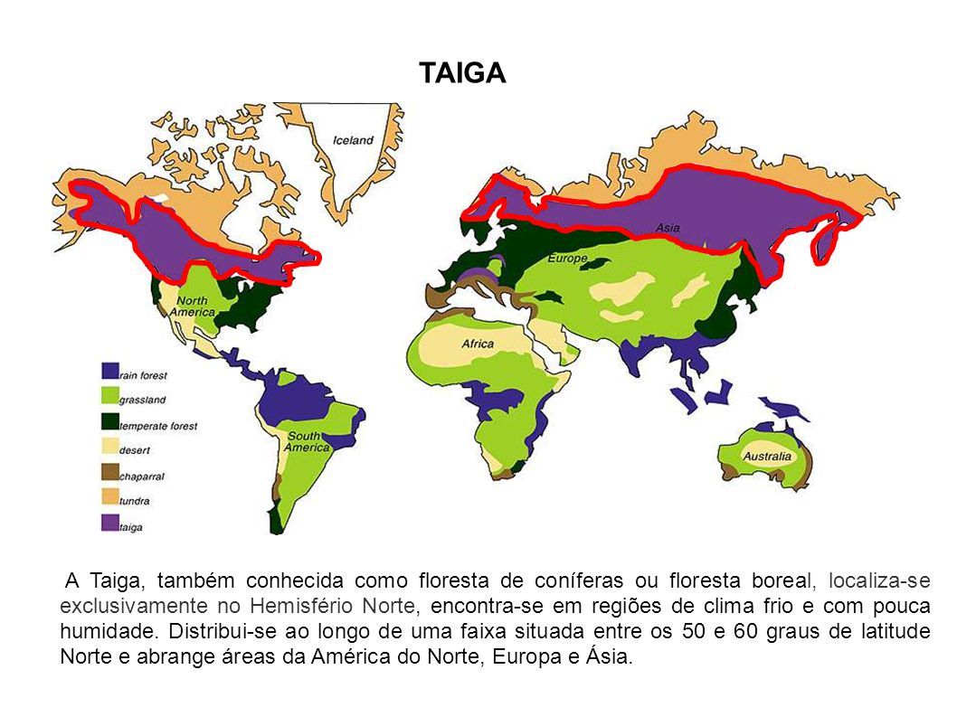 TAIGA A Taiga, também conhecida como floresta de coníferas ou floresta boreal, localiza-se exclusivamente no Hemisfério Norte, encontra-se em regiões