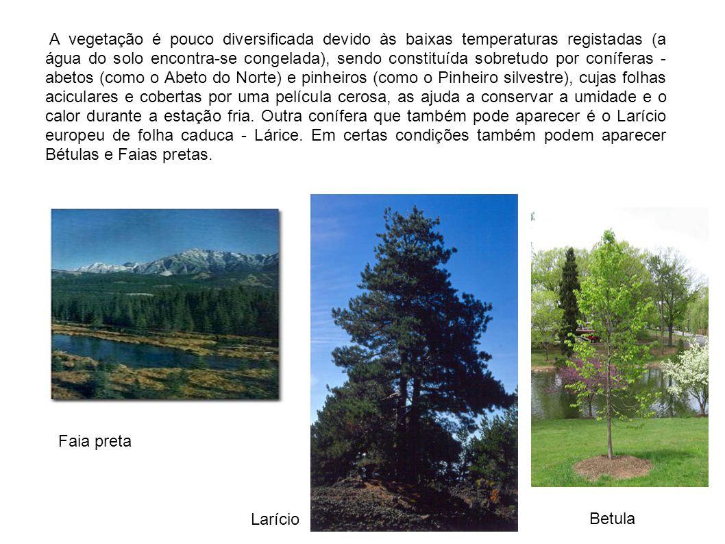 A vegetação é pouco diversificada devido às baixas temperaturas registadas (a água do solo encontra-se congelada), sendo constituída sobretudo por con