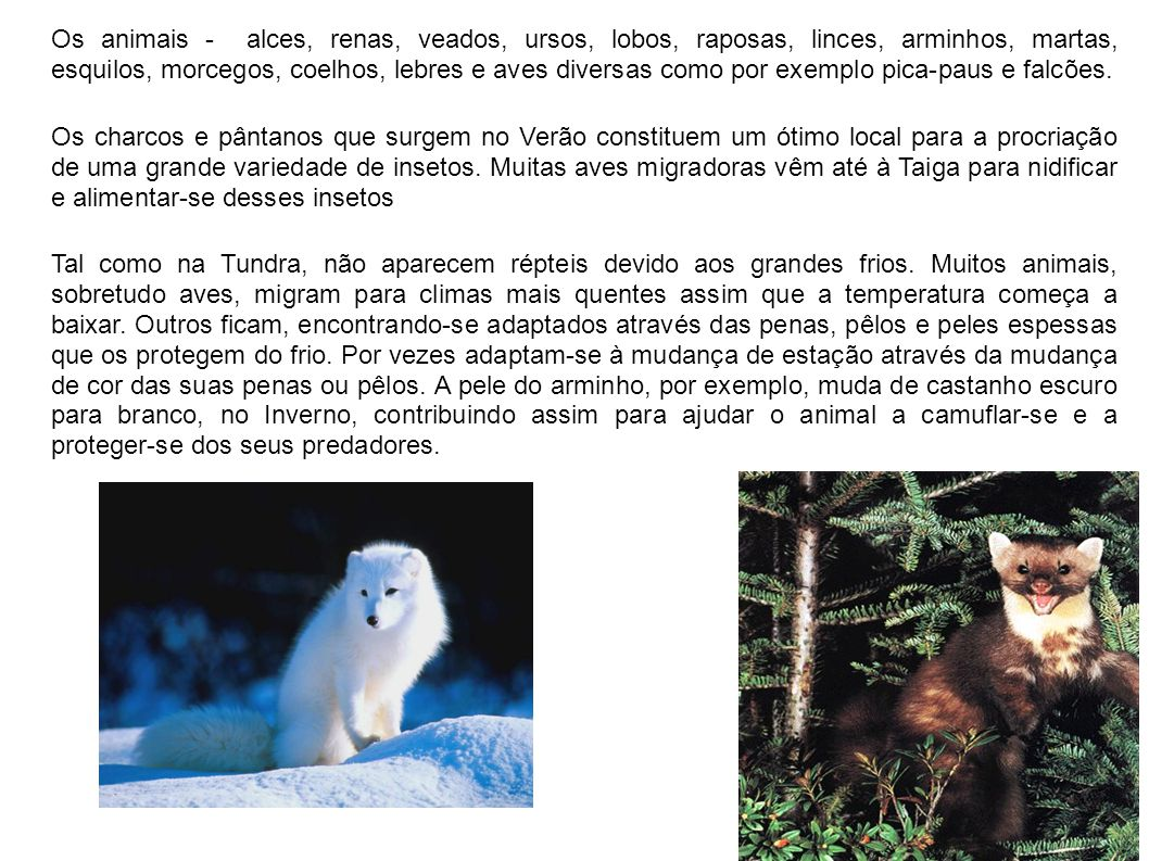 Os animais - alces, renas, veados, ursos, lobos, raposas, linces, arminhos, martas, esquilos, morcegos, coelhos, lebres e aves diversas como por exemp