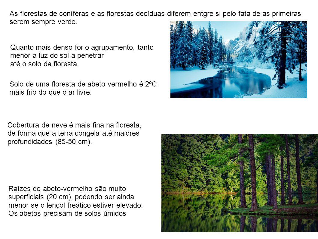 As florestas de coníferas e as florestas decíduas diferem entgre si pelo fata de as primeiras serem sempre verde. Quanto mais denso for o agrupamento,