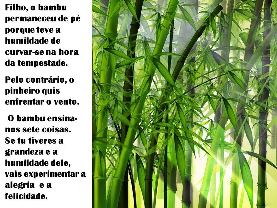 …e estes bambus tão frágeis continuam de pé ?