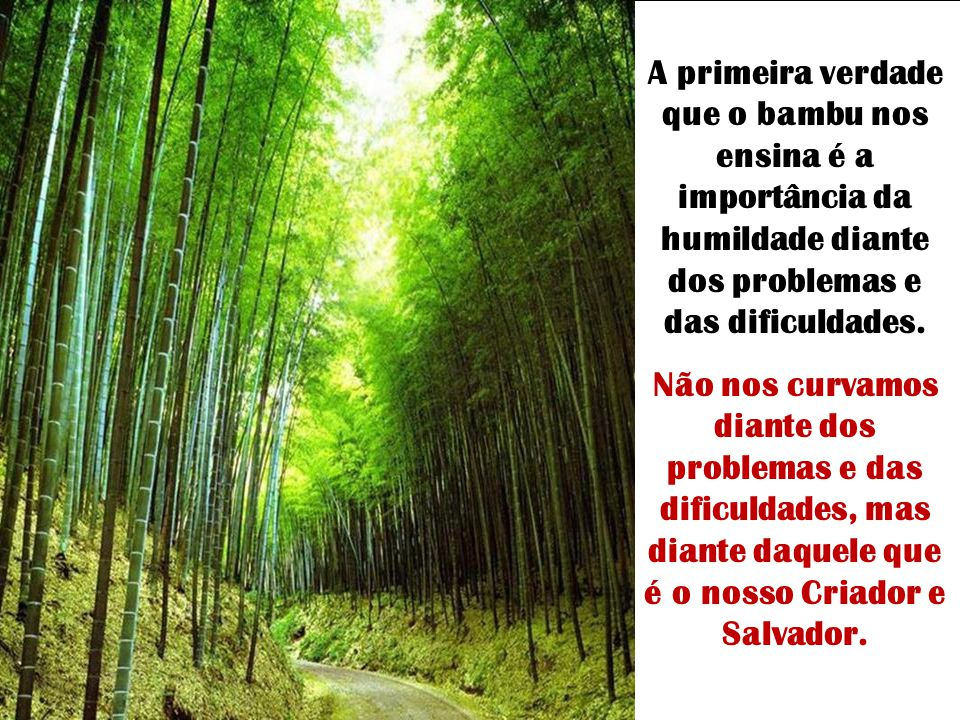 Filho, o bambu permaneceu de pé porque teve a humildade de curvar-se na hora da tempestade. Pelo contrário, o pinheiro quis enfrentar o vento. O bambu