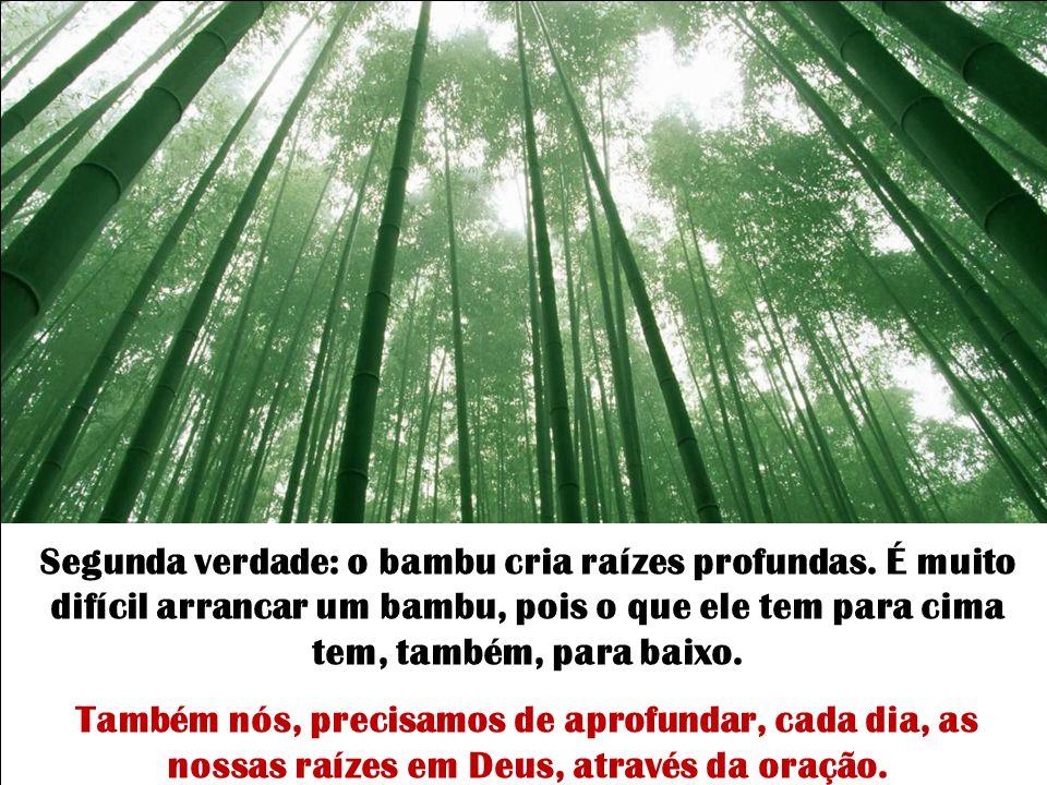 A primeira verdade que o bambu nos ensina é a importância da humildade diante dos problemas e das dificuldades. Não nos curvamos diante dos problemas