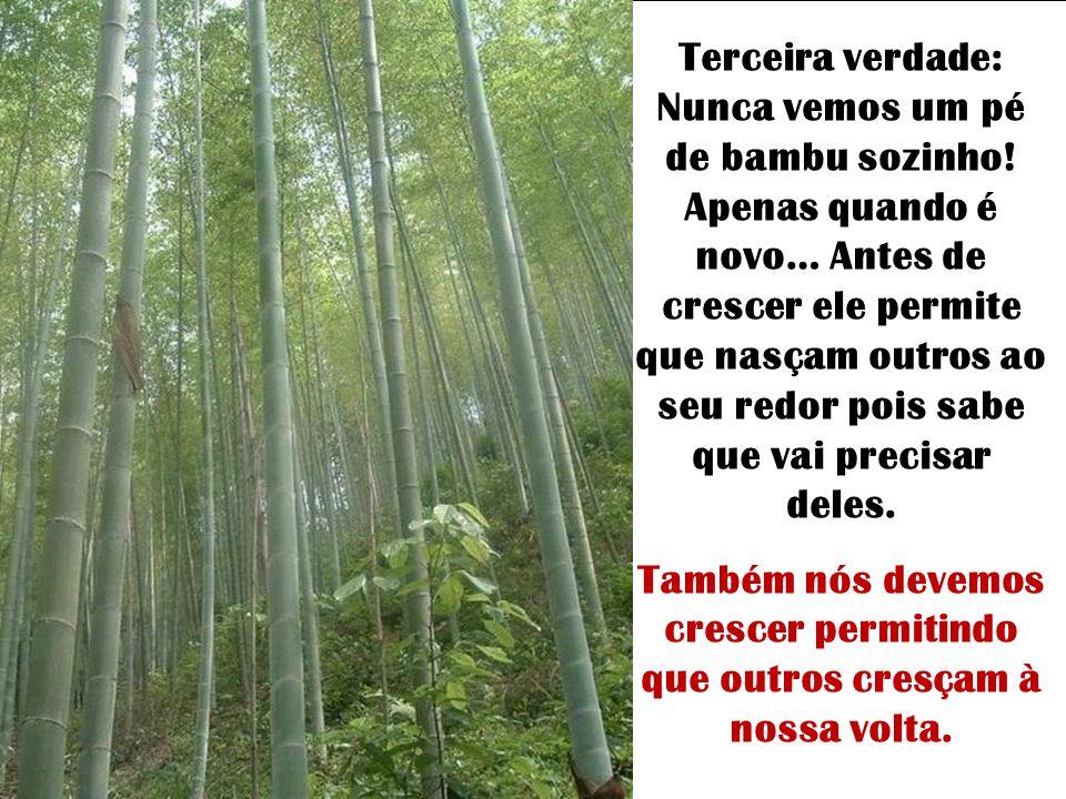 Segunda verdade: o bambu cria raízes profundas. É muito difícil arrancar um bambu, pois o que ele tem para cima tem, também, para baixo. Também nós, p