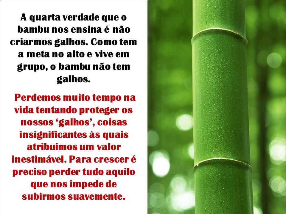 Terceira verdade: Nunca vemos um pé de bambu sozinho! Apenas quando é novo… Antes de crescer ele permite que nasçam outros ao seu redor pois sabe que