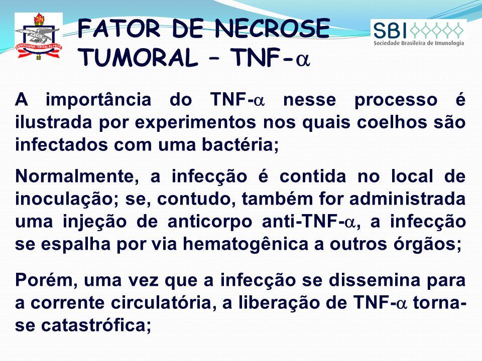 FATOR DE NECROSE TUMORAL – TNF-  A importância do TNF-  nesse processo é ilustrada por experimentos nos quais coelhos são infectados com uma bactéria; Normalmente, a infecção é contida no local de inoculação; se, contudo, também for administrada uma injeção de anticorpo anti-TNF- , a infecção se espalha por via hematogênica a outros órgãos; Porém, uma vez que a infecção se dissemina para a corrente circulatória, a liberação de TNF-  torna- se catastrófica;
