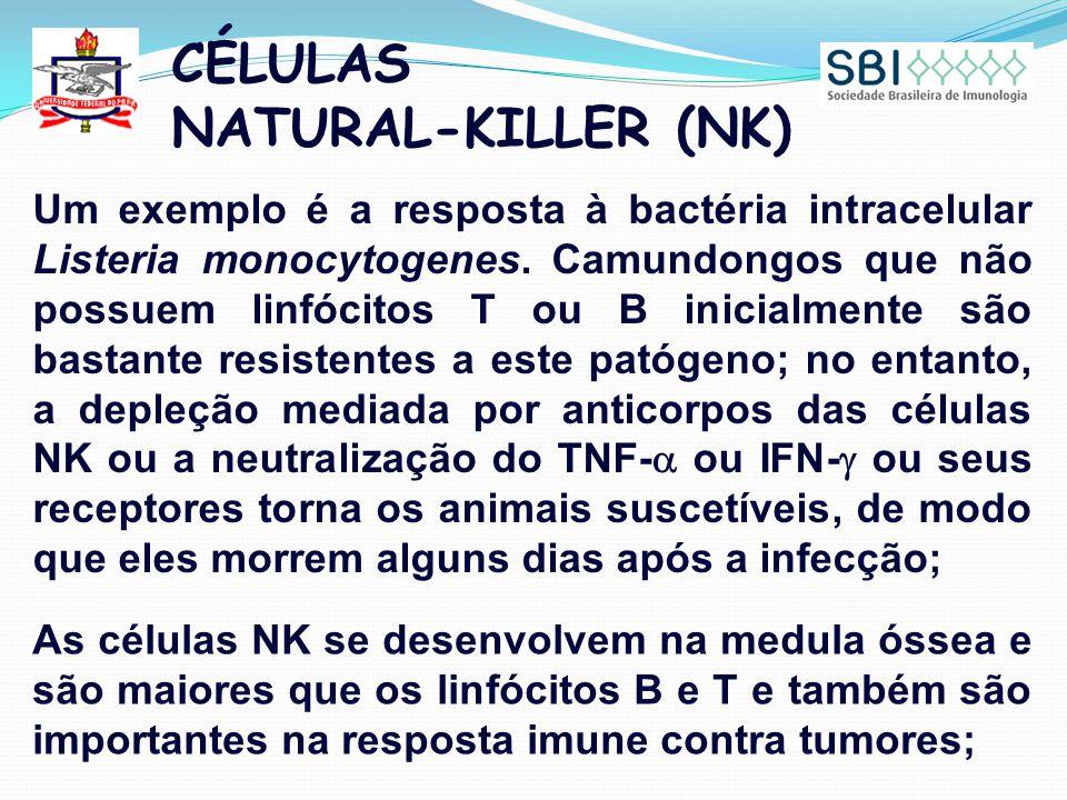 CÉLULAS NATURAL-KILLER (NK) Um exemplo é a resposta à bactéria intracelular Listeria monocytogenes. Camundongos que não possuem linfócitos T ou B inic