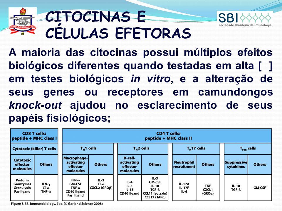 CITOCINAS E CÉLULAS EFETORAS A maioria das citocinas possui múltiplos efeitos biológicos diferentes quando testadas em alta [ ] em testes biológicos i